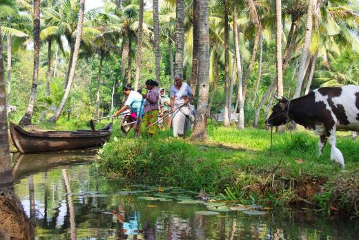 Backwaters 26