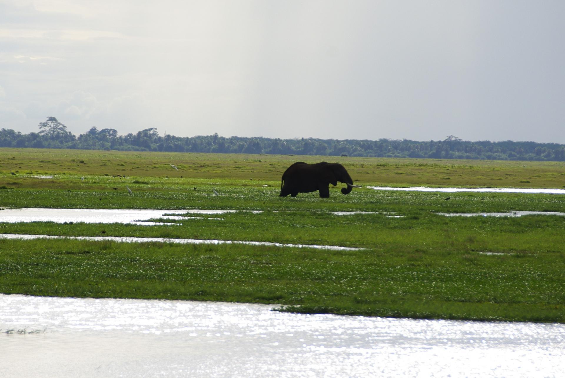 Amboseli 11