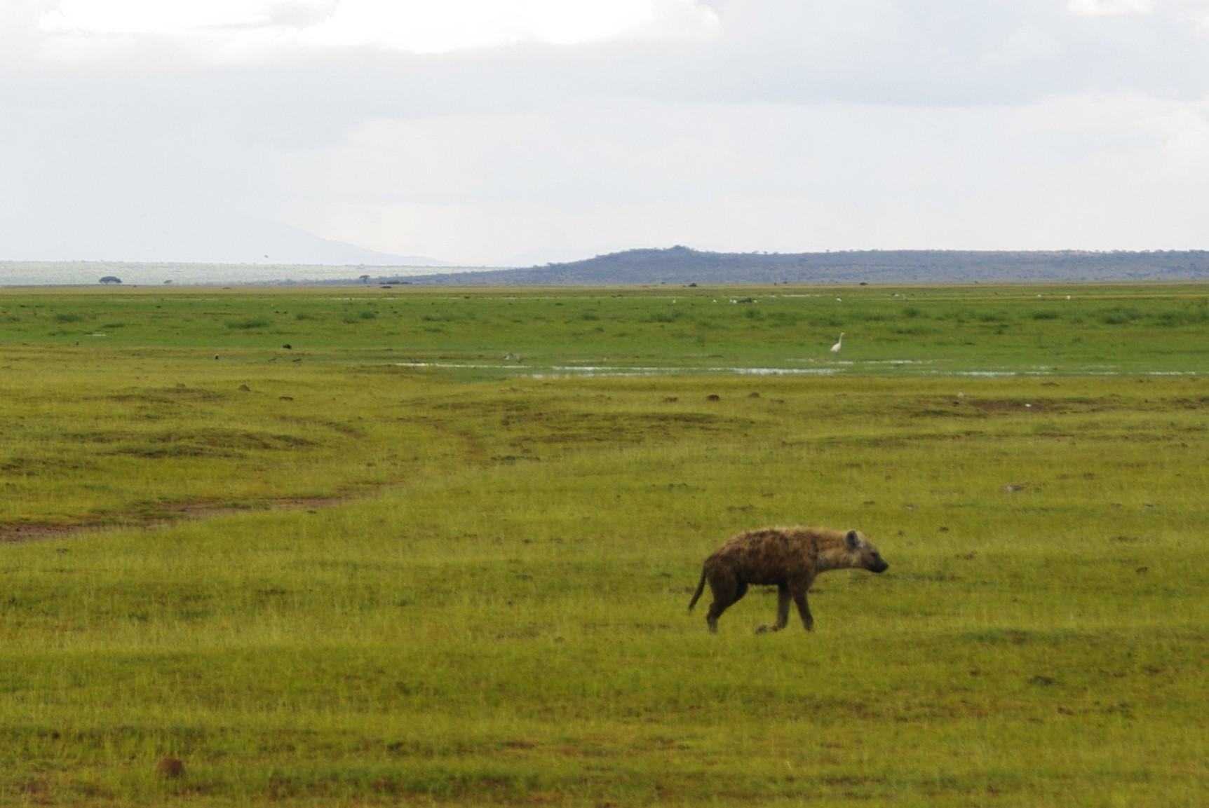 Amboseli 15