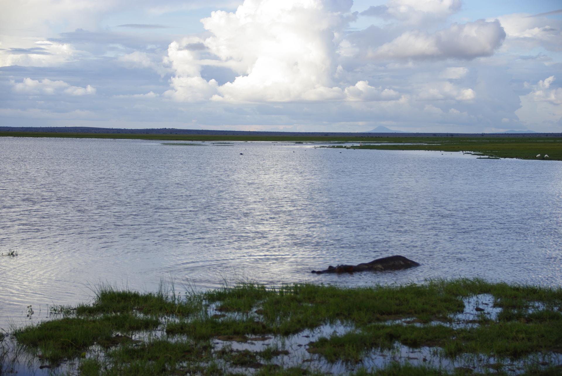 Amboseli 16