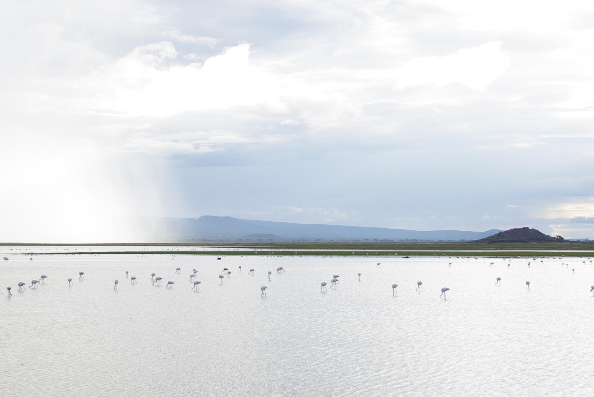 Amboseli 18