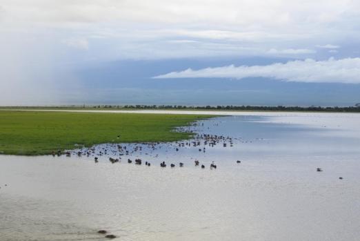 Amboseli 20