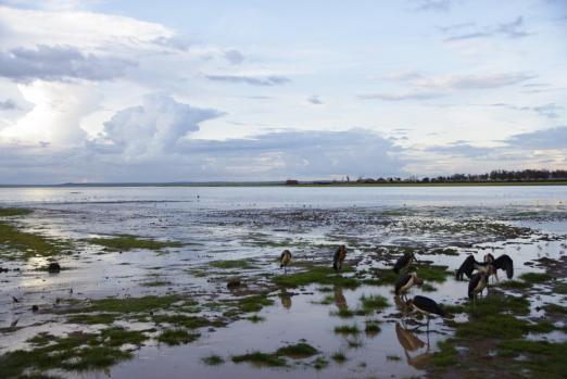 Amboseli 23 1
