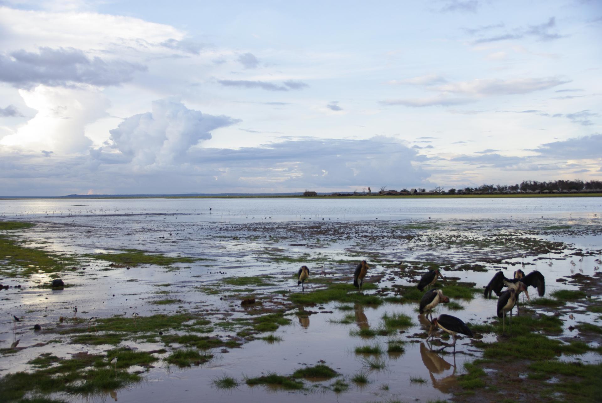 Amboseli 23
