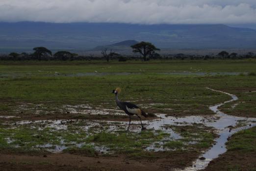 Amboseli 25 1
