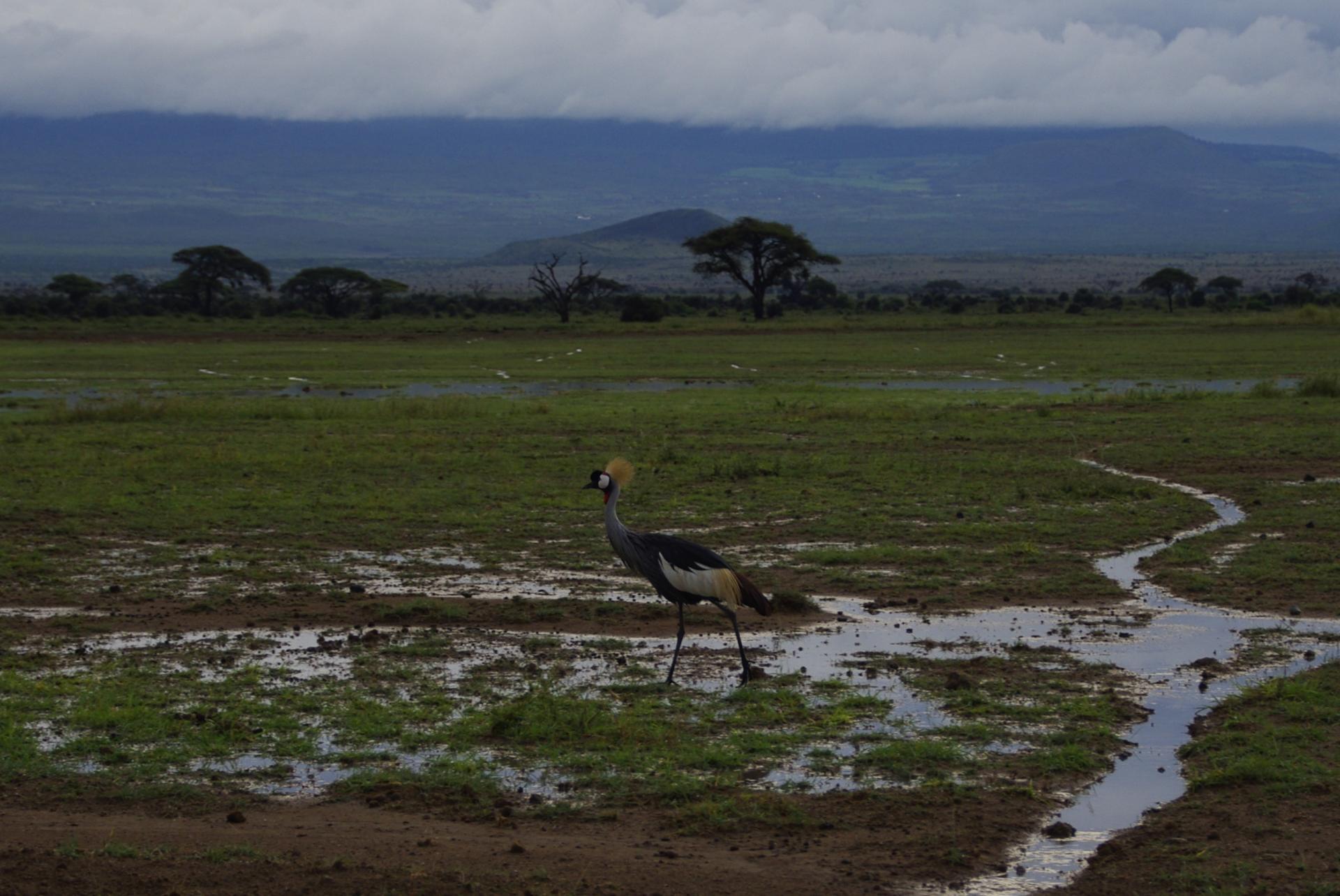 Amboseli 25