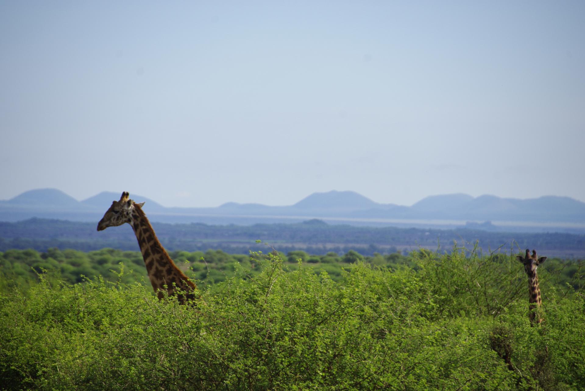 Amboseli 29