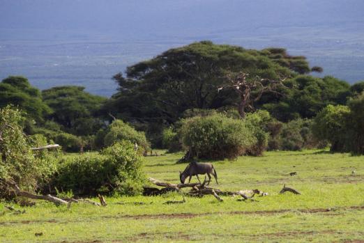 Amboseli 5 1