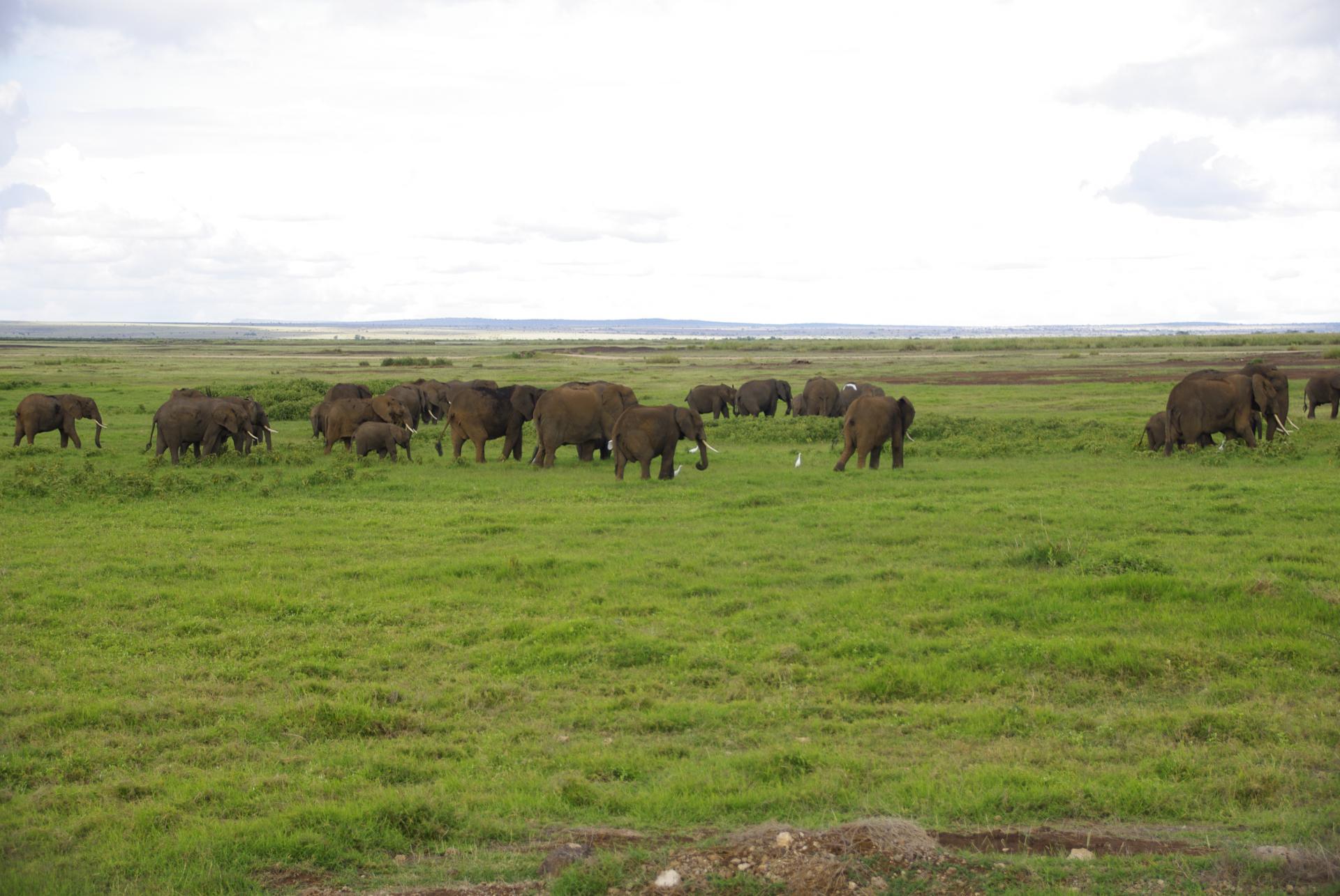 Amboseli 8