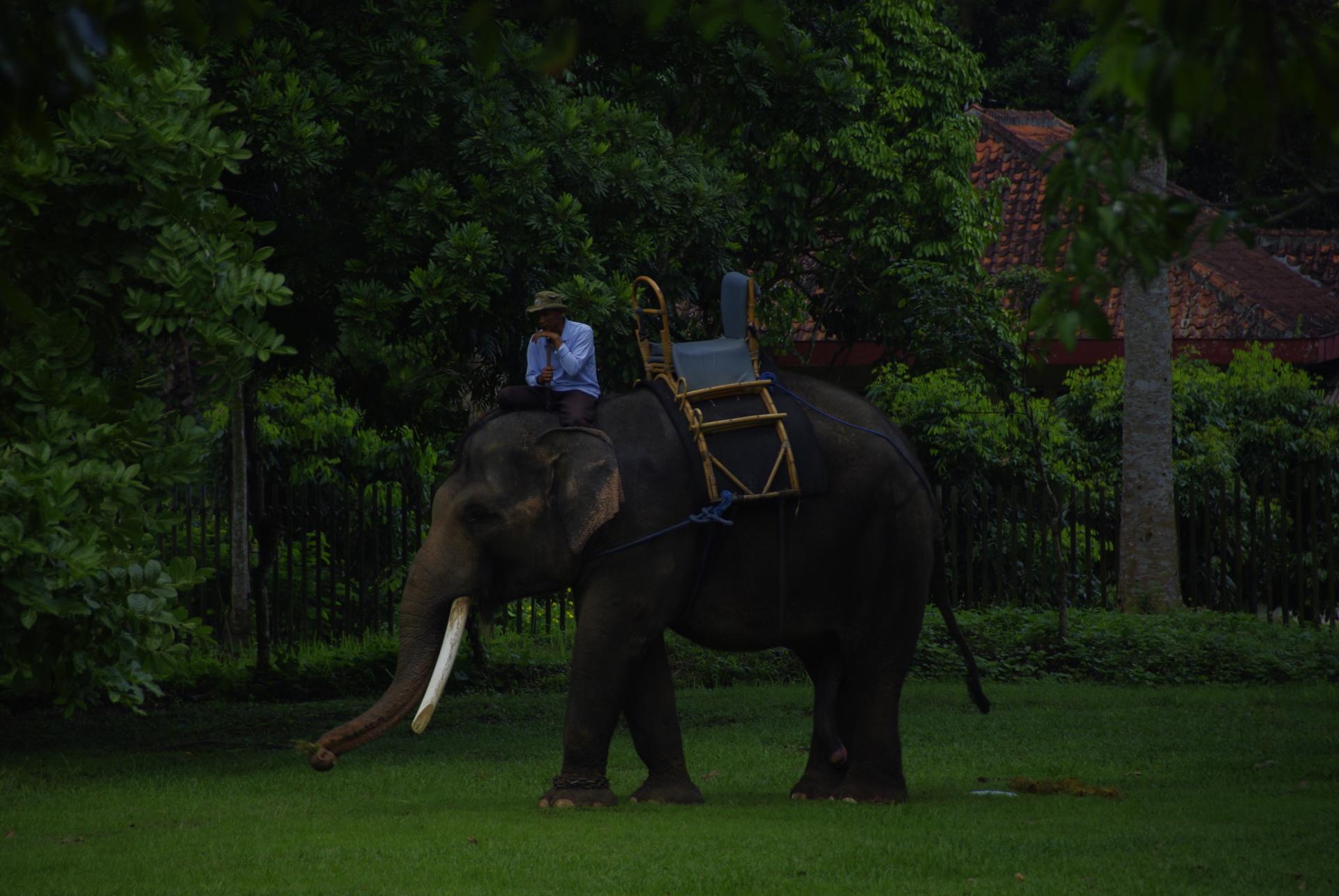 Borobudur 8