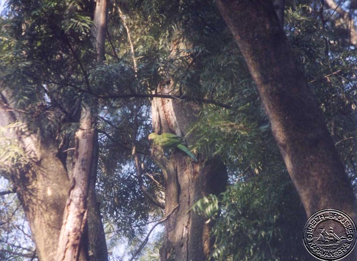 kathmandu-5-1.jpg