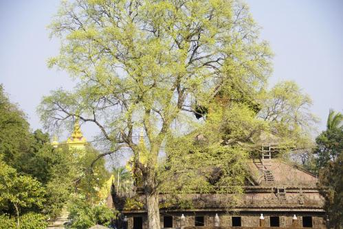 Mandalay 7