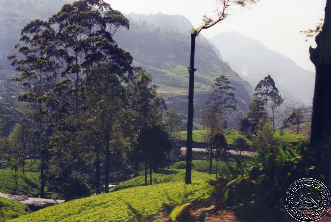 nuwara-eliya