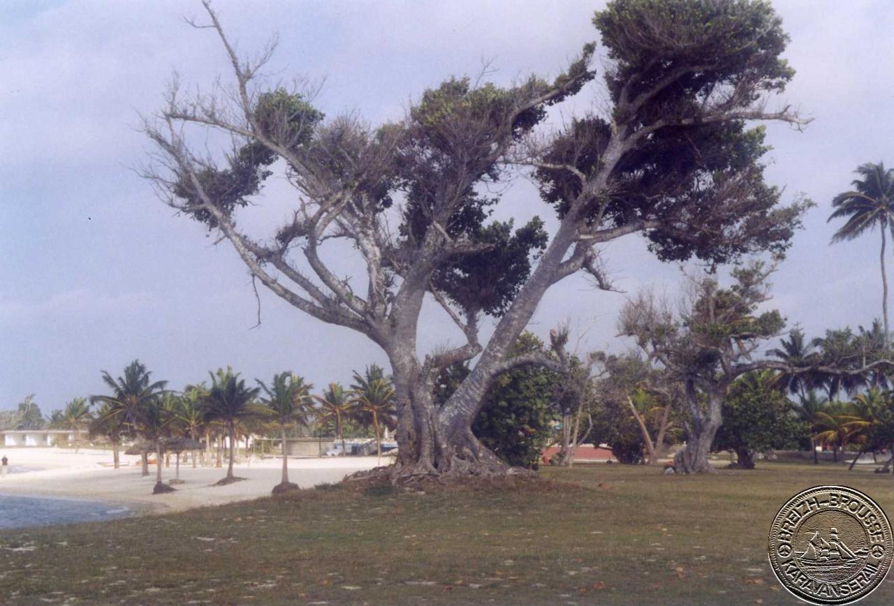 playa-giron-2-1.jpg