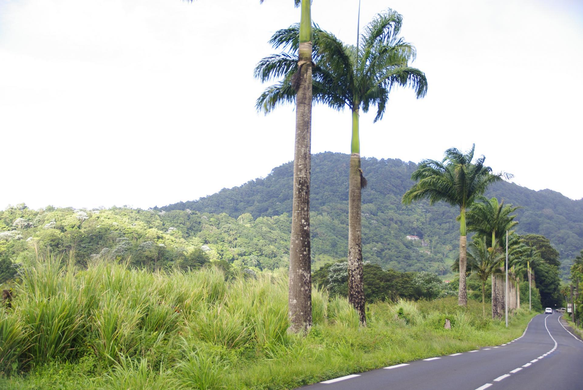 Route de la trace 7